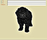 Maggie Toy Poodle