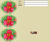 What Flower Border